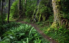 森林, 树, 阡, 性质