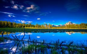lago, Montagne, alberi, foresta, paesaggio