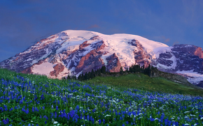 Edith Creek Basin, Mount Rainier National Park, Paradise, Washington, USA