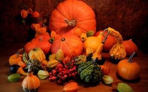 Pumpkin, vegetables, still life