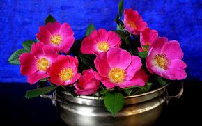 цветы, кастрюля, натюрморт