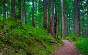 Mount Rainier National Park, foresta, alberi, paesaggio