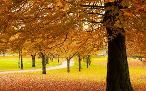 秋, 树, 庞蒂浦, 威尔士, GB