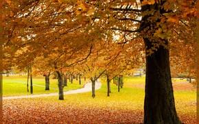 秋, 公园, 树, TRACK, 景观, origtnal