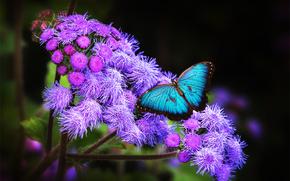 Flores, mariposa, Macro