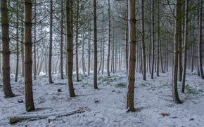 floresta, árvores, neve, paisagem