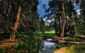 Yosemite National Park, forest, river, landscape