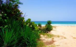 佛罗里达, 大西洋, 景观