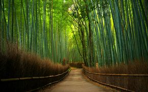 Bamboo Forest, road, nature