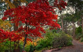 otoño, parque, árboles, TRACK, Un banco, paisaje