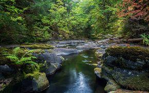 small river, Rocks, stones, trees, nature