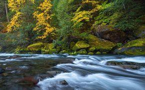 河, 森林, 石头, 秋, 性质