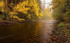 piccolo fiume, foresta, alberi, autunno, natura