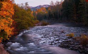 otoño, río, piedras, bosque, árboles, paisaje