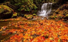 秋, 森林, 瀑布, 石头, 叶子, 性质