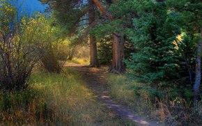 森林, 树, 阡, 景观