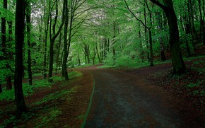 лес, парк, деревья, дорога, пейзаж