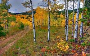 秋, 树, 道路, 山, 景观