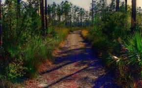 everglades national park, florida, дорога, деревья, пейзаж