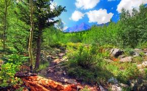 石头, 树, 山, 景观