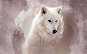 полярный, волк, арт