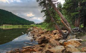 湖, 树, 石头, 森林, 景观
