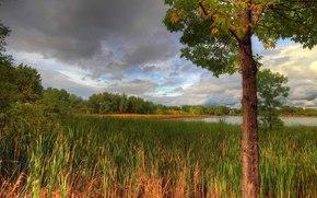 秋, 湖, 树, 景观