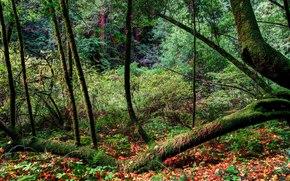 лес, деревья, осень, пейзаж