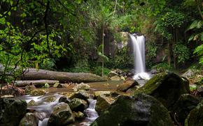 滝, 小さな川, 木, 自然