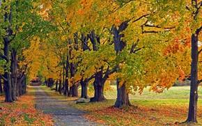 秋, 树, 道路, 景观