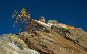 autunno, albero, Rocce, iscrizioni