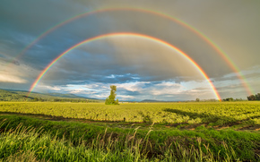 Doppio arcobaleno, campi di mirtilli, Pitt Meadows, Periferia, Yennadon, Maple Ridge, British Columbia, Canada