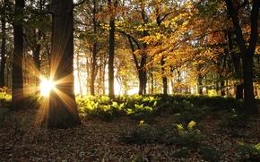 Villaggio Abbazia, Woodland, Lancashire, inghilterra, GB