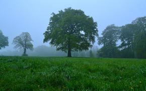 campo, árboles, niebla, naturaleza, paisaje