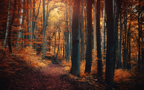 forest, autumn, footpath