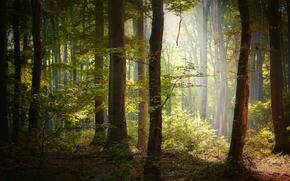 森林, 秋, 阡, 光