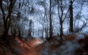 Ballando con il Cavaliere al chiaro di luna, foresta, sentiero, notte