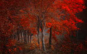 forest, trees, path, branch, leaves, autumn