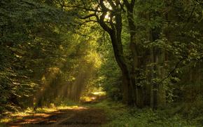 木, 歩道, 葉, 道路