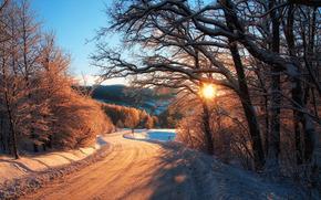 上午, 太阳, 森林, 道路, 村
