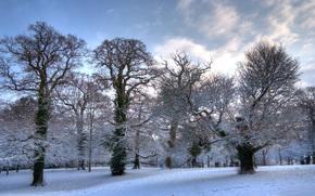 winter, trees, snow, Hursley, Hampshire, England, GB