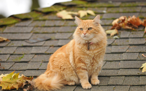 Ruginit, pisică, frunze, acoperiș