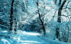 inverno, nevicata, stradale, foresta, alberi
