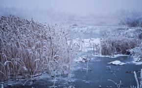 piccolo fiume, inverno, nebbia, paesaggio