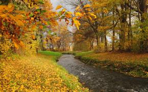 autumn, river, forest, trees, landscape