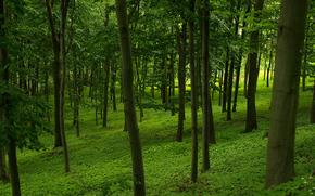 森林, 树, 性质, 景观