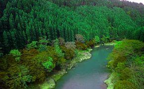 Rivière Oi, forêt, Arashiyama, Kyotom, Japon