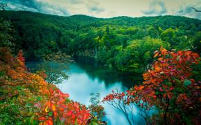 秋, 森林, 湖, 树, 瀑布, 景观, 原