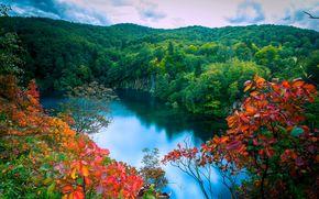 秋, 森林, 湖, 树, 瀑布, 景观, (治疗)