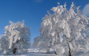 winter, trees, snow, landscape